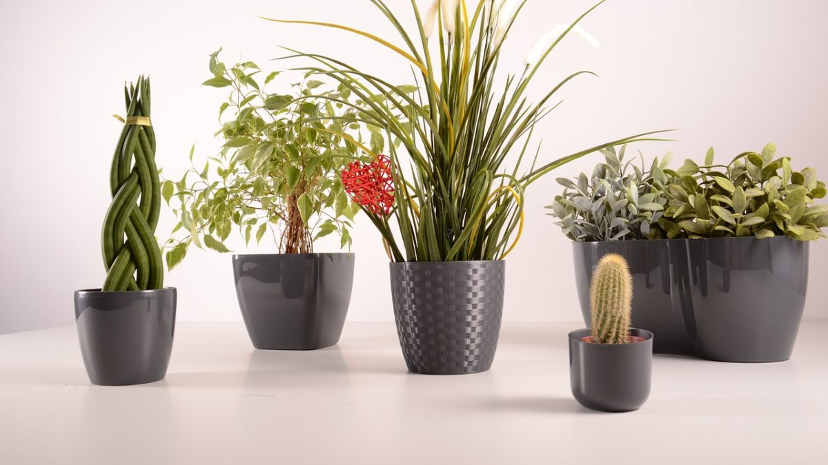 Indoor Plants You Can Gift to a Plant Loving Friend or Family Member