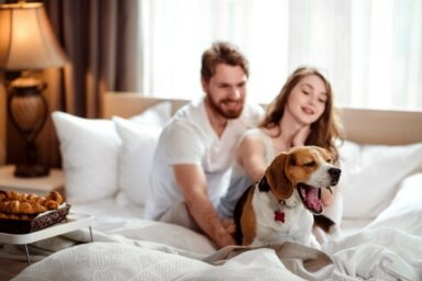 Hotels That Welcome A Dog : Pet-Friendly Trip Planning